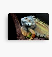 Who's that creeping up on me? Canvas Print