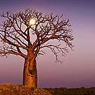 Twilight Moonlight by Mieke Boynton