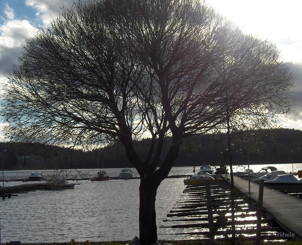 Beautifully shaped Tree by Riihele