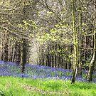 Drifts of blue by John Edwards