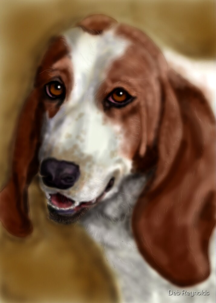 Basset by Deb Reynolds