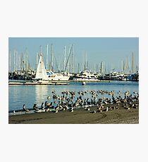 Santa Barbara California Crowded Marina Photographic Print
