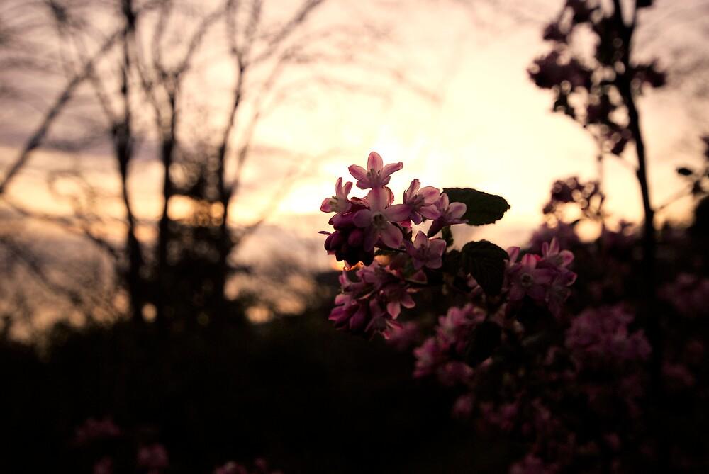 Flower by Jedy