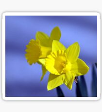 Daffodil Duo Sticker