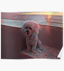 Artsy Pup at Sunset Pink Blue Poster