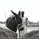 Donkey - Kassala, Sudan by Sarah Edgcumbe
