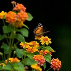 Butterfly at Rest by TJ Baccari Photography