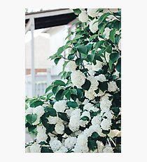 Little Porch Hydrangeas Photographic Print