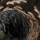 Turkey feathers by KMorral