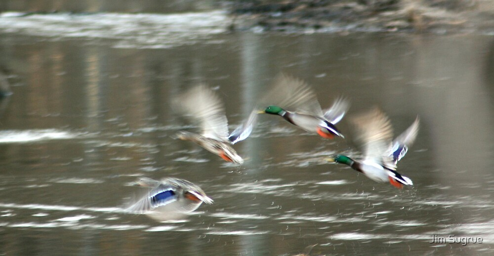 Ducks in flight by Jim Sugrue