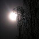 moonlit willow by joak