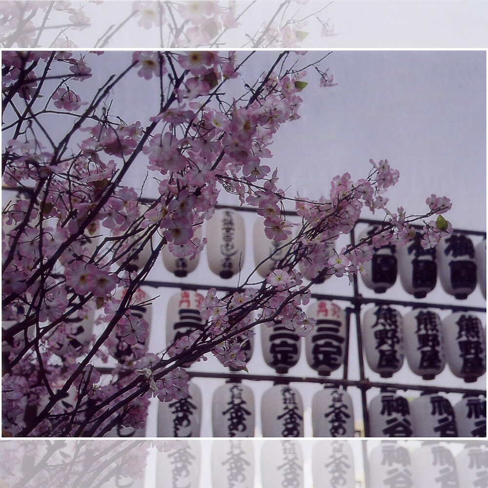 Sakura by anthylorrel