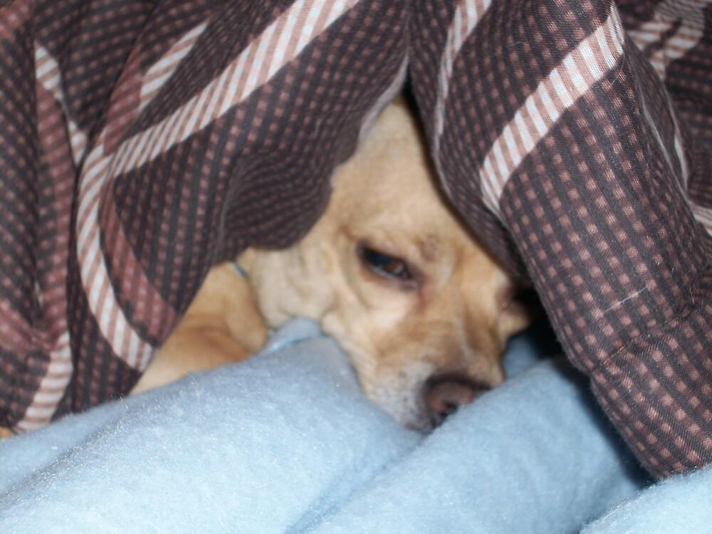 """Sleepy head """"George"""" by Pawprints"""