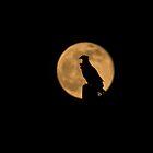 Bird Silhouette by Zina Stromberg