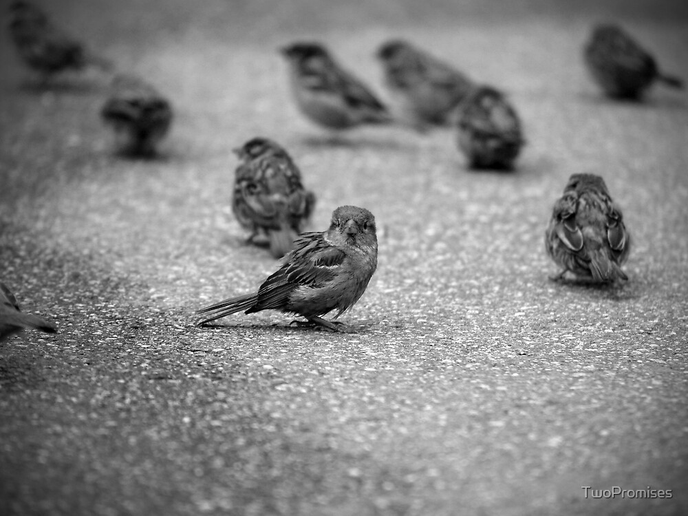 Little birds. by TwoPromises