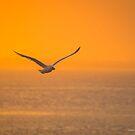 Larus Delawarensis - Ring-Billed Gull's Breakfast   Hampton Bays, New York by © Sophie W. Smith
