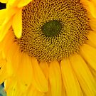 Sunflower Detail by Larry Costales