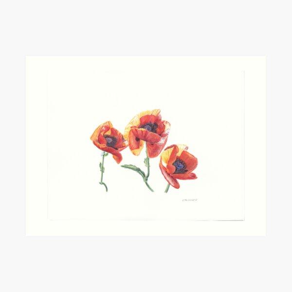 Asian Poppies Art Print