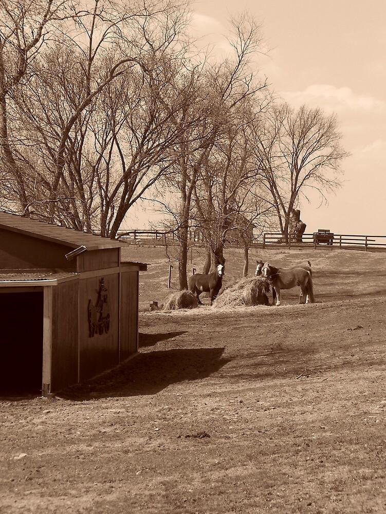 Horse Farm 2 by Kristie King