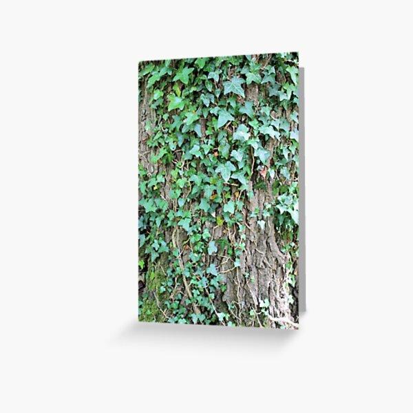 Ivy leaves on Oak tree Greeting Card