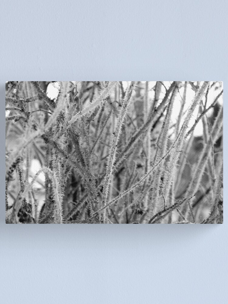 Alternate view of Thorns Canvas Print