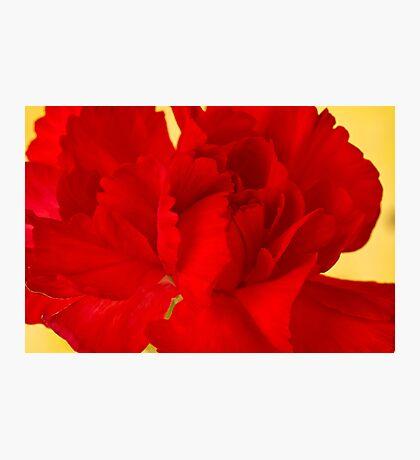 Red Carnation Macro Photographic Print