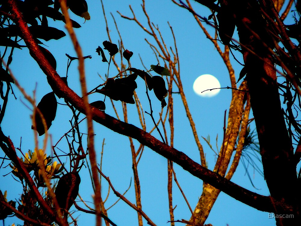 AUTUM MOON AT SUNUP by Ekascam