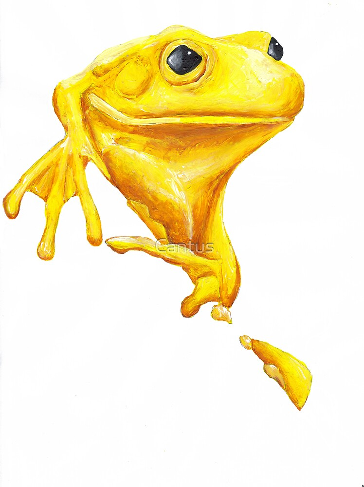 A frog by any other name... by Cantus