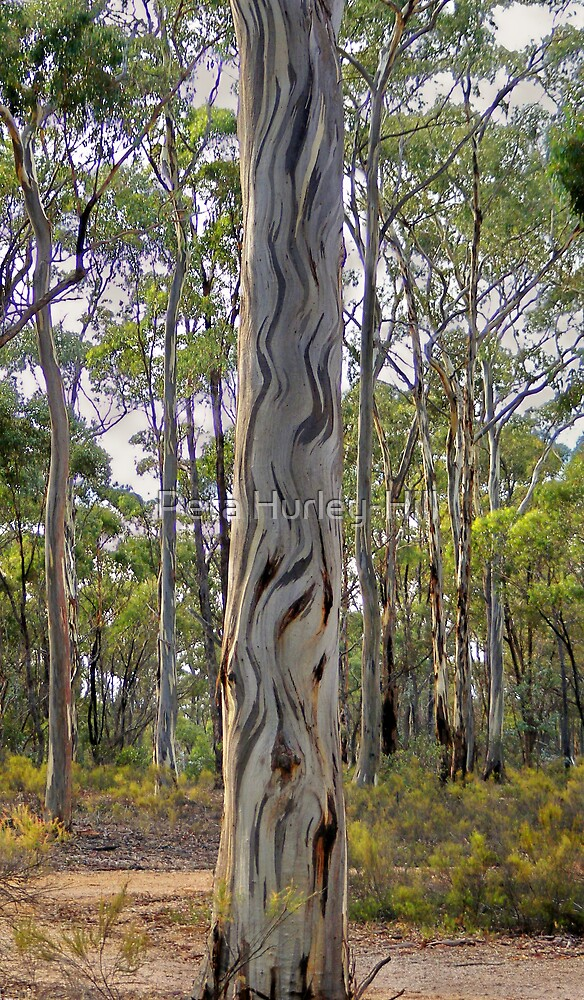 painted tree by Peta Hurley-Hill