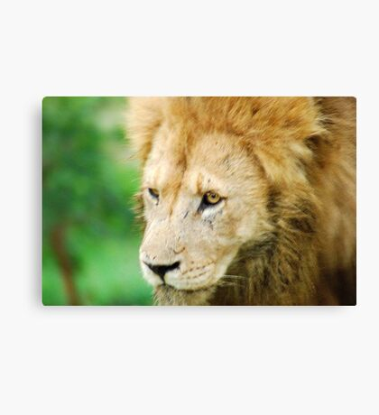 "THE LION - 'Panthera leo"" Canvas Print"