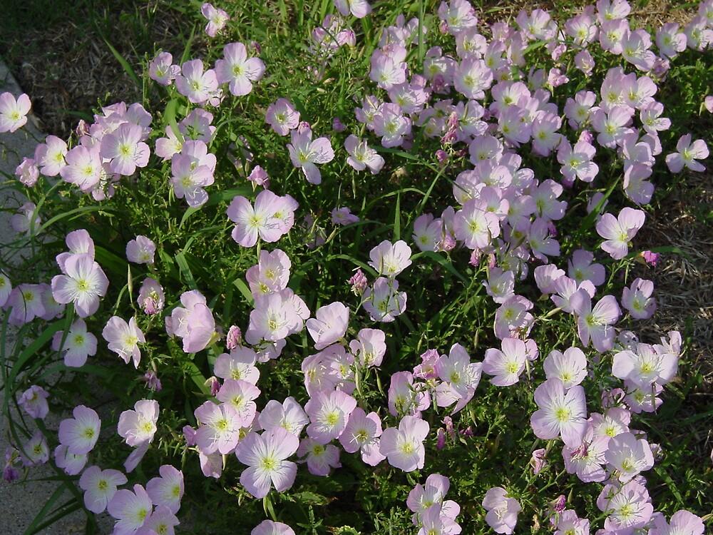 Texas Wild Flowers by Ionn