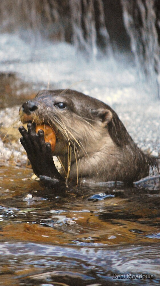 One Playful Otter by Debi Meadows