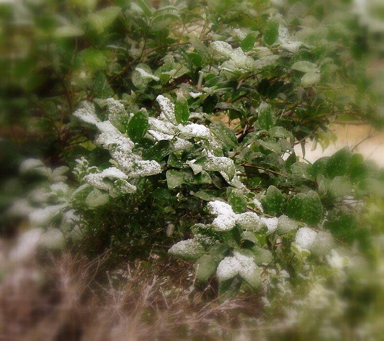 Snow by Ionn