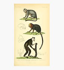 The Animal Kingdom by Georges Cuvier, PA Latreille, and Henry McMurtrie 1834 579 - Mammalia Mammals Photographic Print