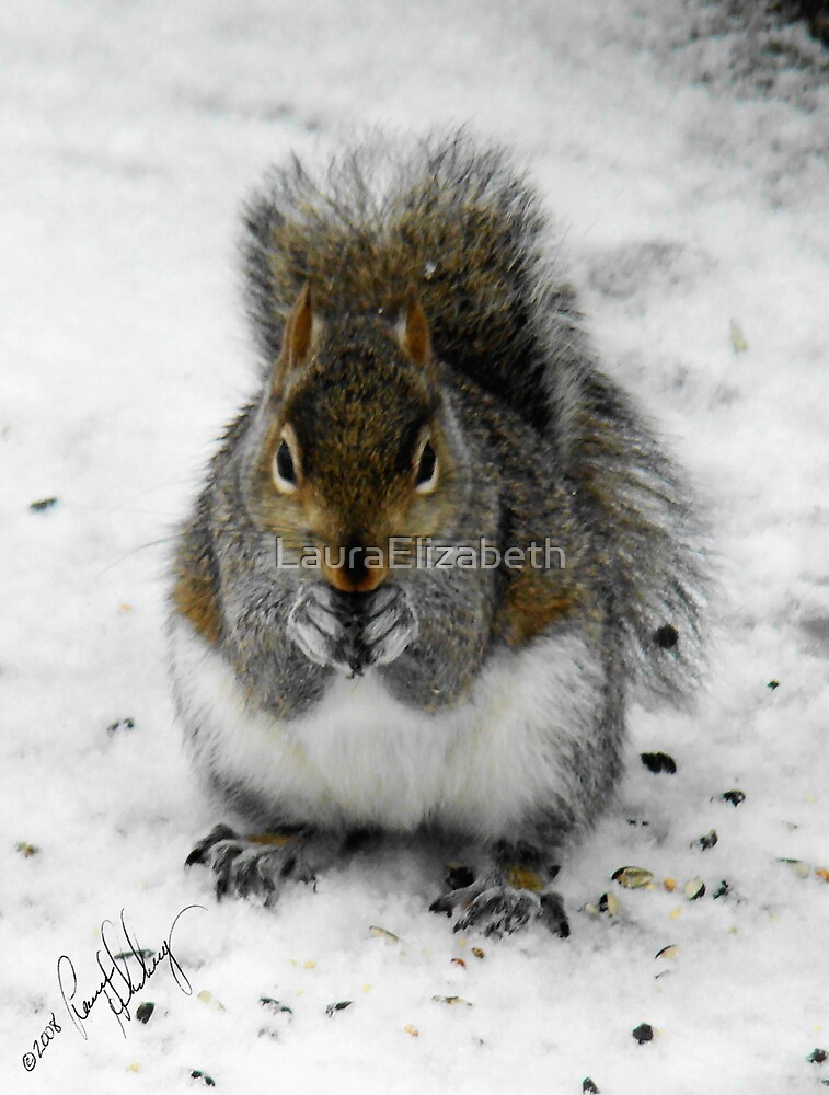 Winter Feeder by LauraElizabeth