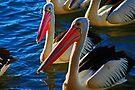 Pelikane von Evita