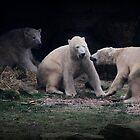 The Three Bears by Ladymoose