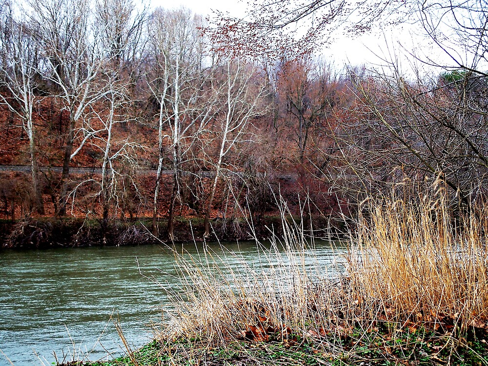 River bank by Judi Taylor