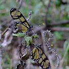 mirror butterflies by Fiona Smith