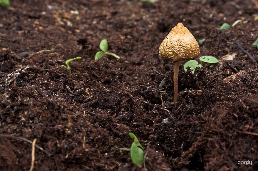 Magic Mushroom. by gordy