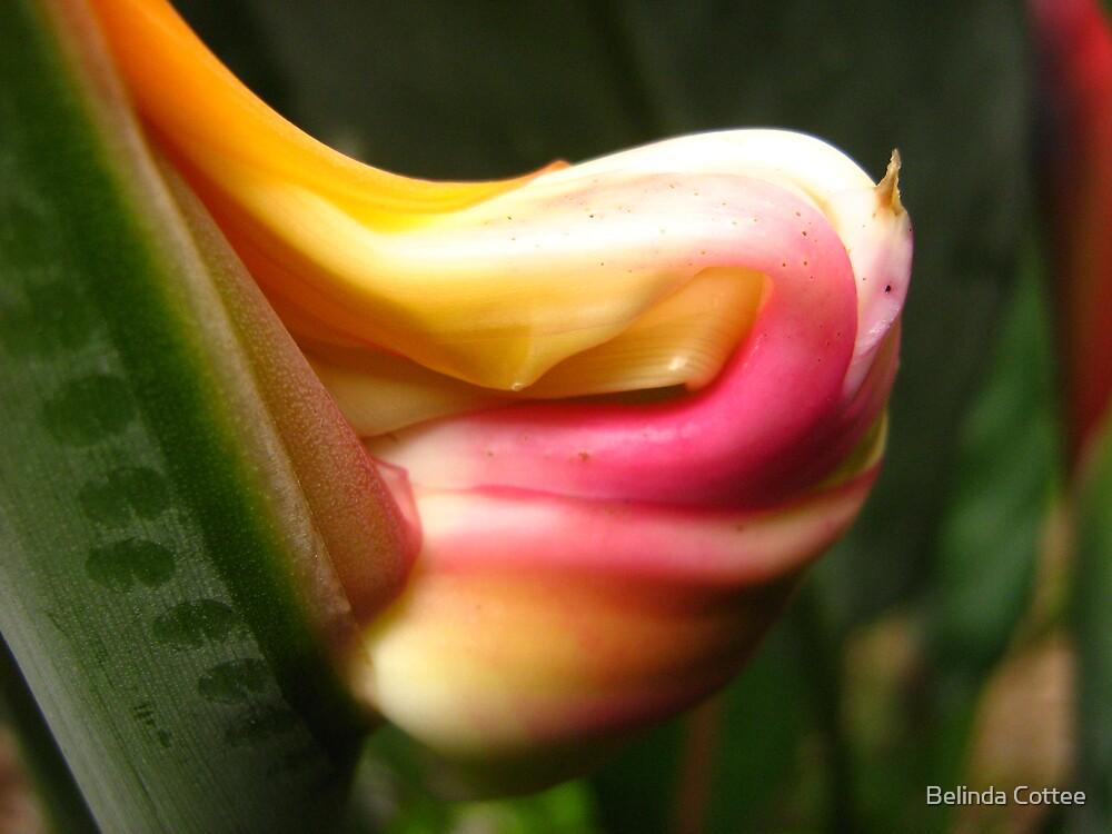 bursting forth by Belinda Cottee