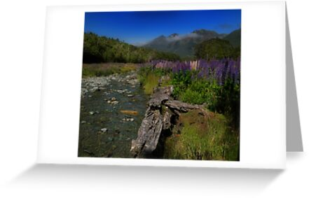 What Do You Say When Purple Fields Of Fiordland Smile At You? by Peter Kurdulija