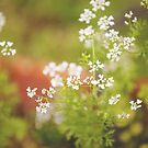 Blooming Cilantro  by MarthaBurns
