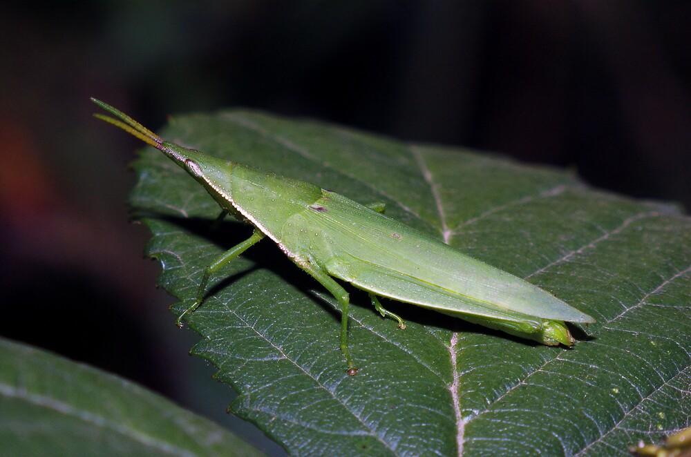 I am a leaf... by David  Hall
