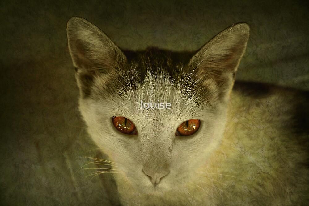 feline by louise