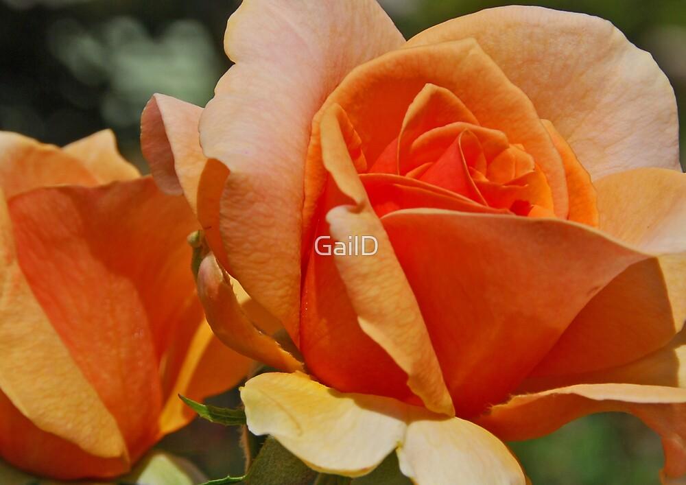 Simply Orange by GailD