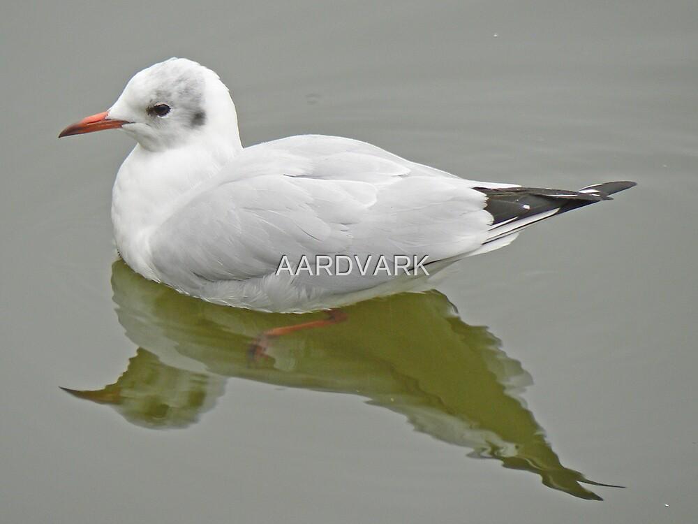 A Black Headed Gull by AARDVARK