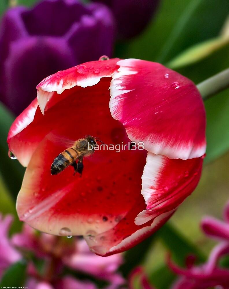 Spring 12 by bamagirl38