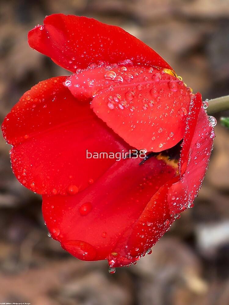 Spring 15 by bamagirl38