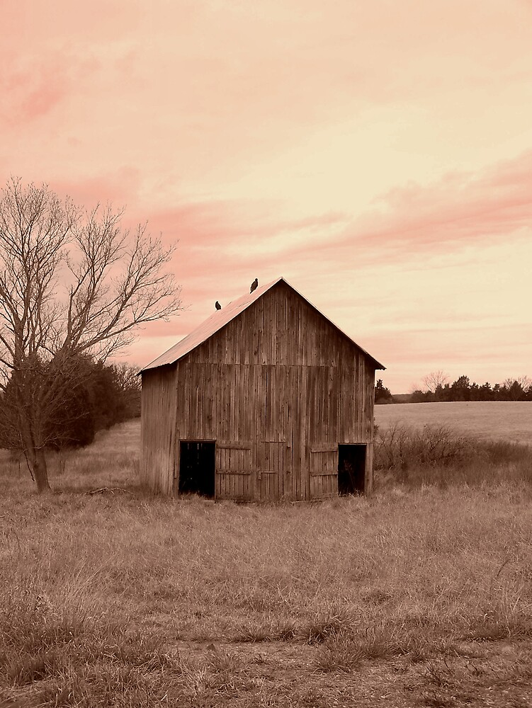Bird atop Old Barn by Kristie King